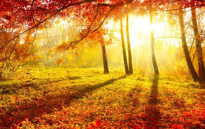 Finding-The-Fall-Foliage